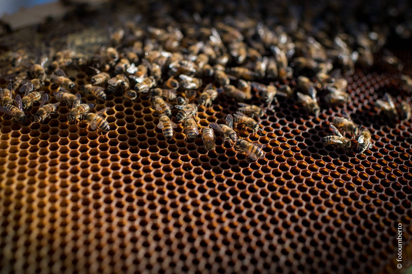apicoltura sicilia