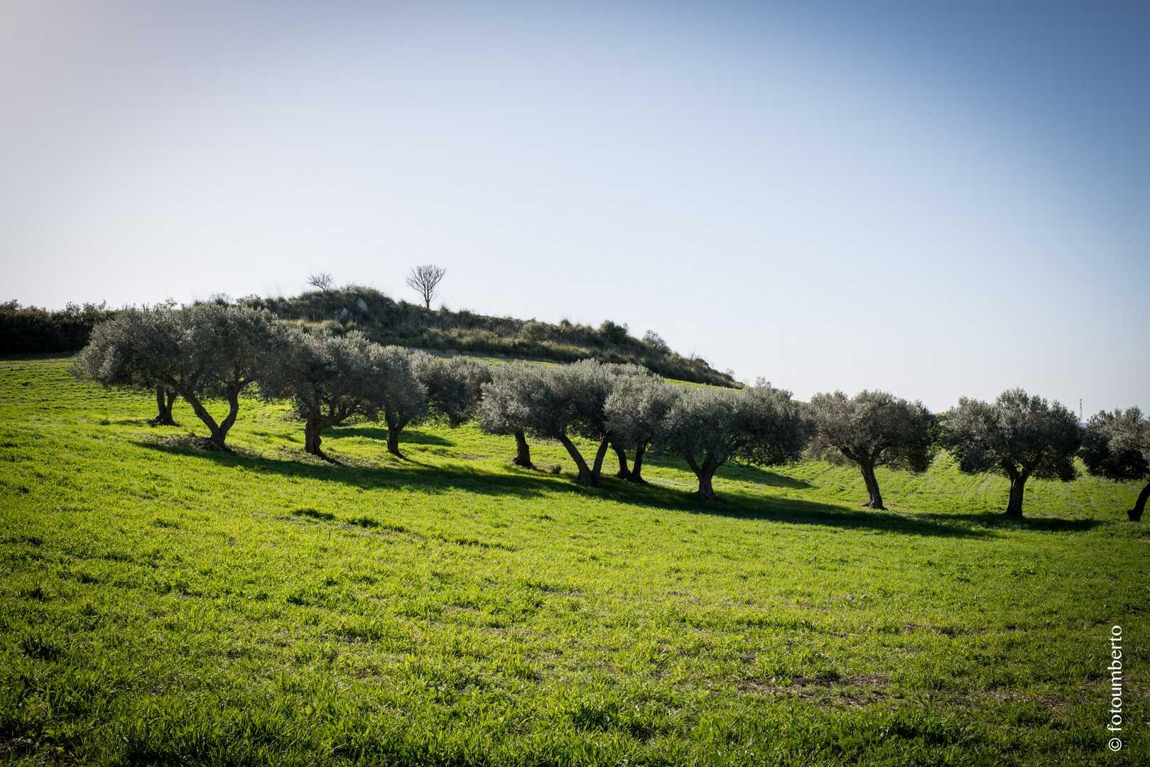 fotografo agricoltura sicilia