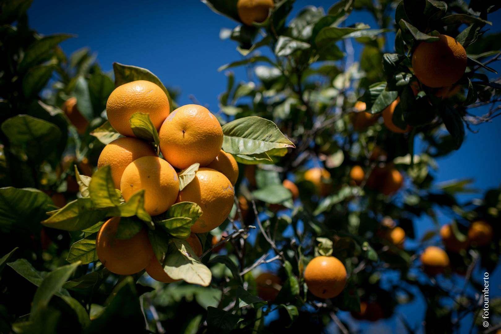 arance sicilia